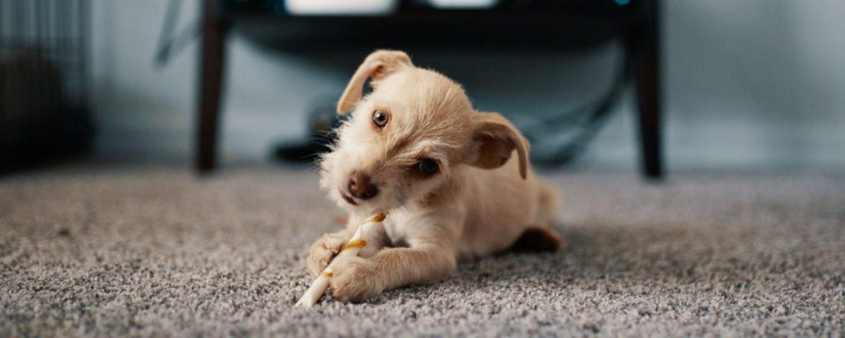 Dog Hacks to Keep Your Apartment Clean
