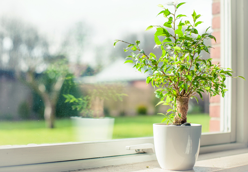 green plant for good indoor air quality