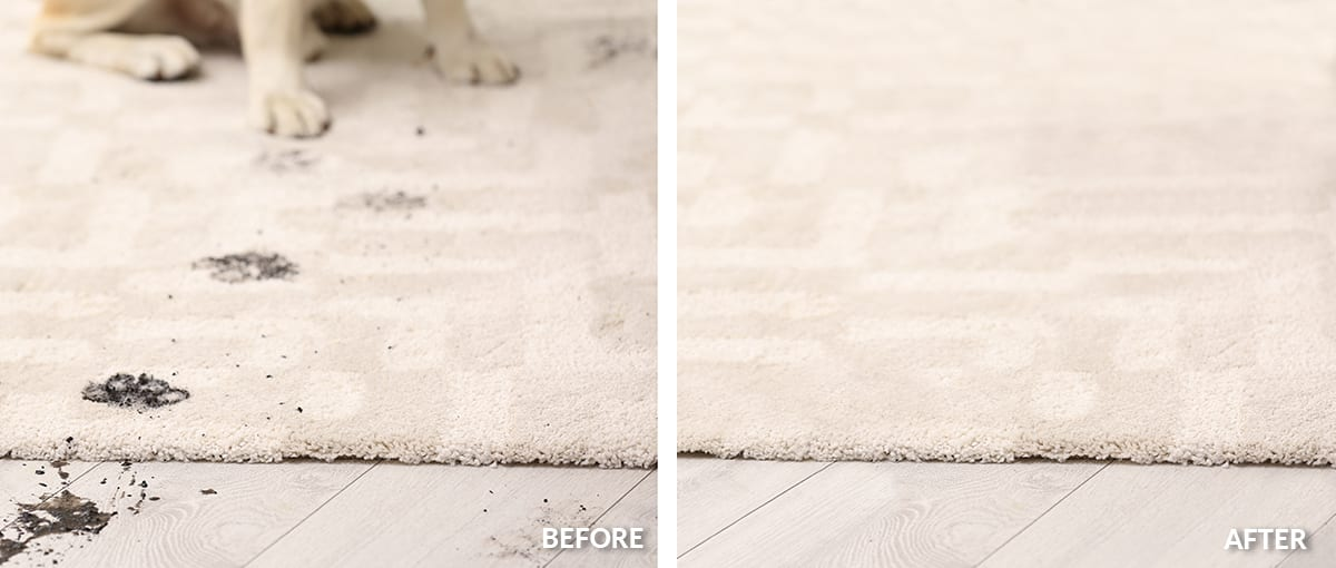 A One Carpet Cleaning Las Vegas - Pet Stain Carpet Cleaner