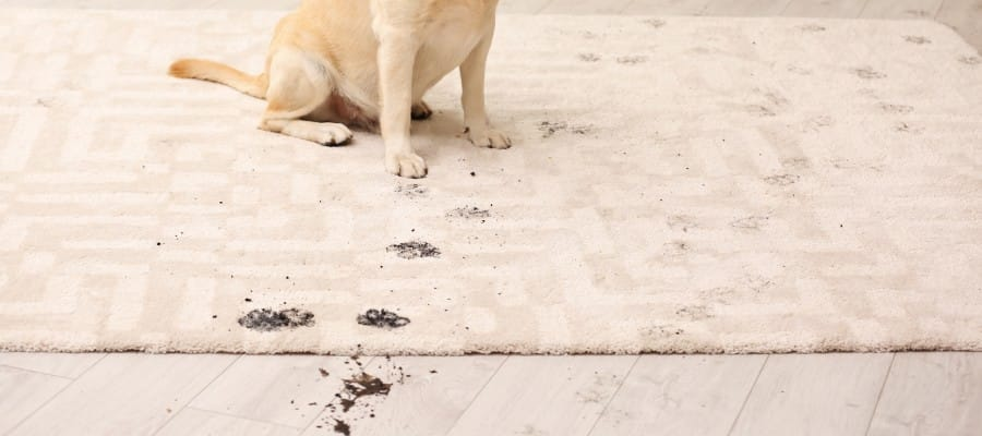 A One Carpet Cleaning - Pet Odor and Urine Cleaning